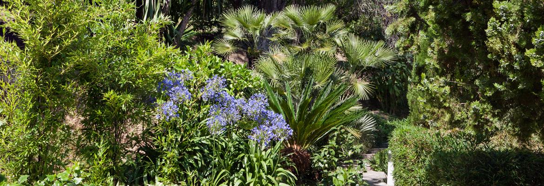vegetation-citronneraie-menton-mazet
